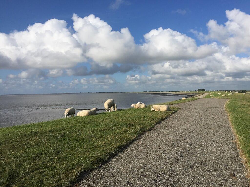 Dijk in Friesland