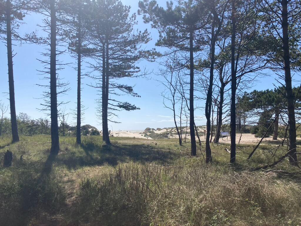 Bosjes bij Kop van Schouwen Duivenland
