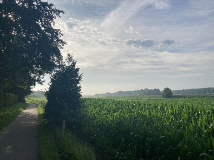Zuiderzeeroute maisveld en ochtendgloren