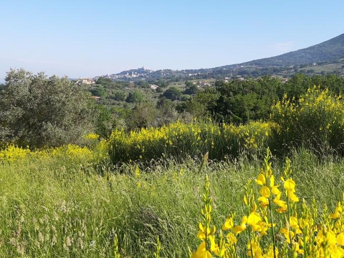 Assisi standplaats Meravigliosa Umbria